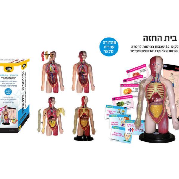 מודל גוף האדם לילדים ללימוד אנטומיה IAM